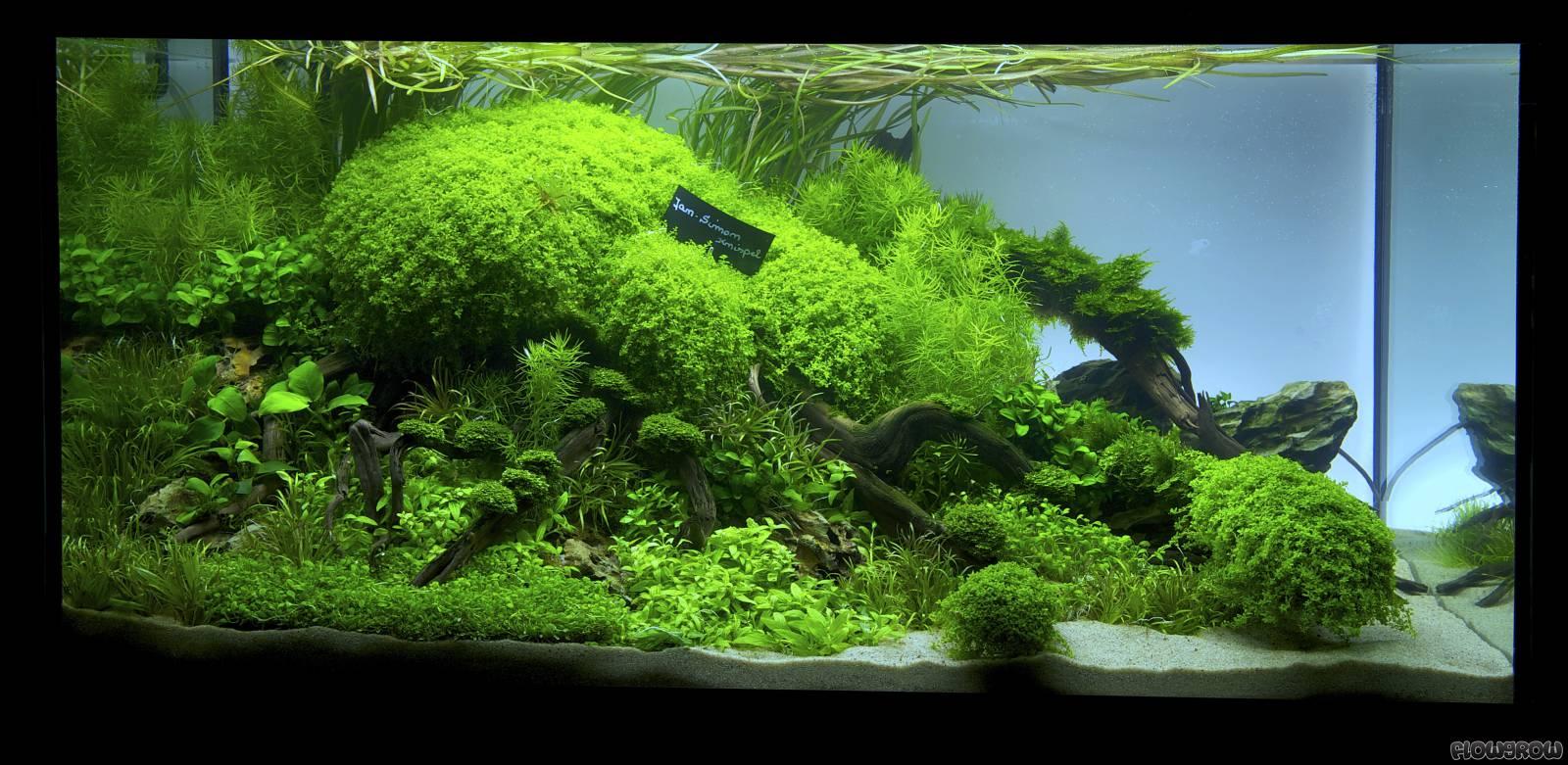 Closer - Flowgrow Aquascape/Aquarien-Datenbank